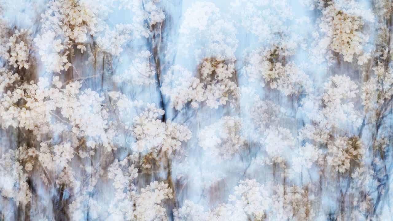 Yoshinori Mizutani Photography Stylistic